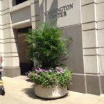 Summer Palms at Washington Center exterior plant installation