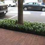 exterior plant maintenance