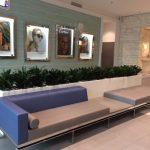 Fashion Centre Draceanas interior plant installation