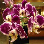 Orchid interior plant design