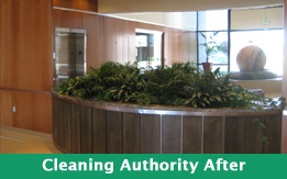After Interior plantscaping at The Cleaning Authority