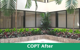 Plant Design Copt after Exterior plantscaping