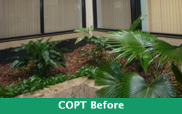 Plant Design Copt Before Exterior plantscaping
