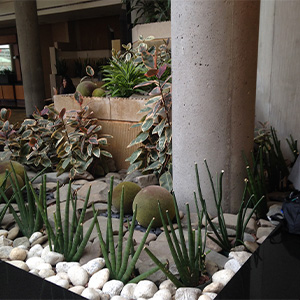 Hyatt Hotel Before Interior plantscaping